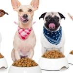 Pet food (cibo per cani), ma di cosa è fatto??